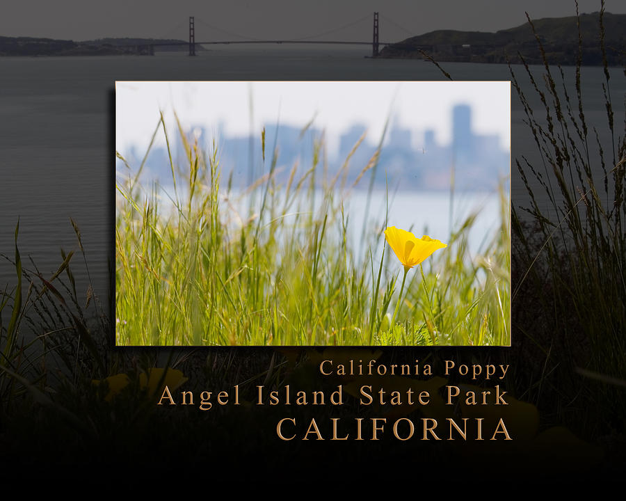 Just One California Poppy At Angel Island State Park - San Francisco Bay California Photograph  - Just One California Poppy At Angel Island State Park - San Francisco Bay California Fine Art Print