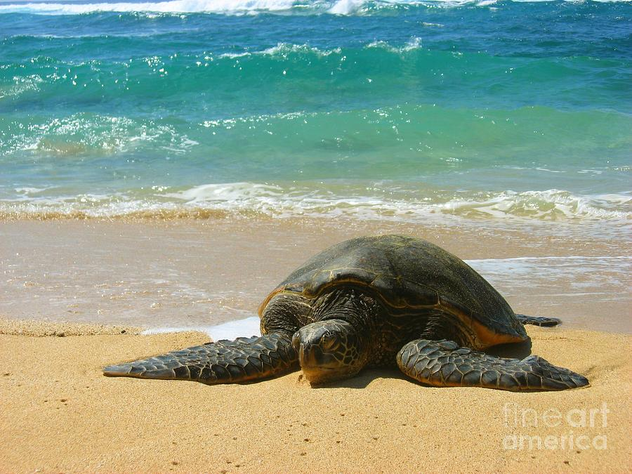 Sealife Photograph - Just Resting by Christine Stack