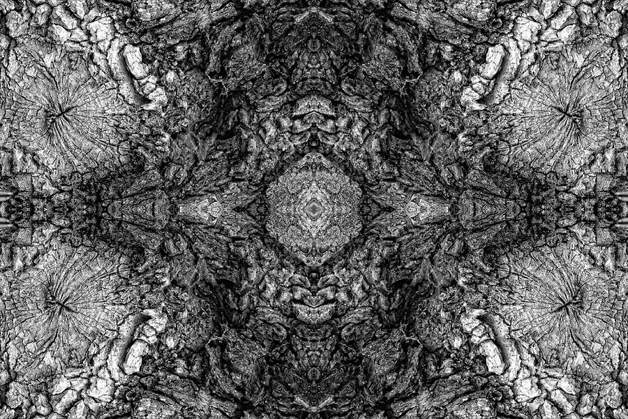 Kaleidoscope In Wood 2 Horizontal Photograph  - Kaleidoscope In Wood 2 Horizontal Fine Art Print