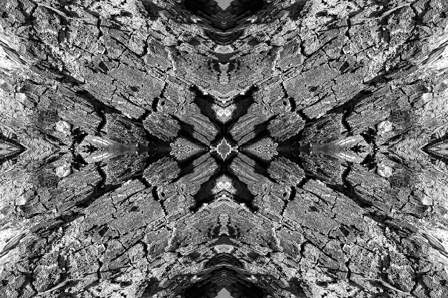 Kaleidoscope In Wood 5 Horizontal Photograph  - Kaleidoscope In Wood 5 Horizontal Fine Art Print