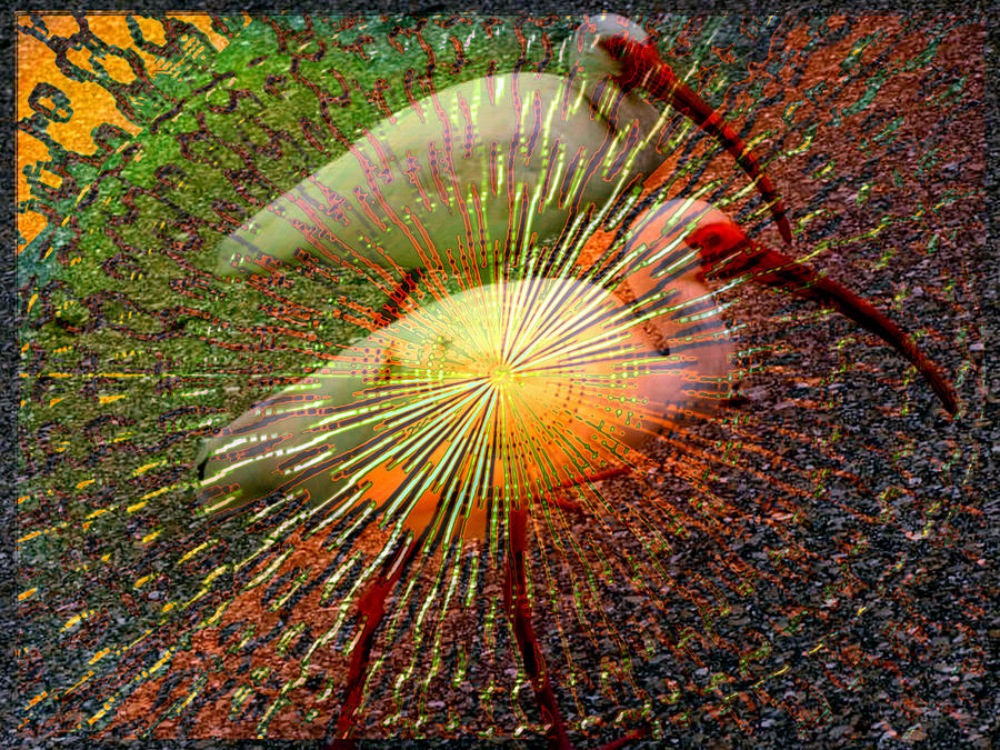 Kalidescope Of Ibis Digital Art  - Kalidescope Of Ibis Fine Art Print