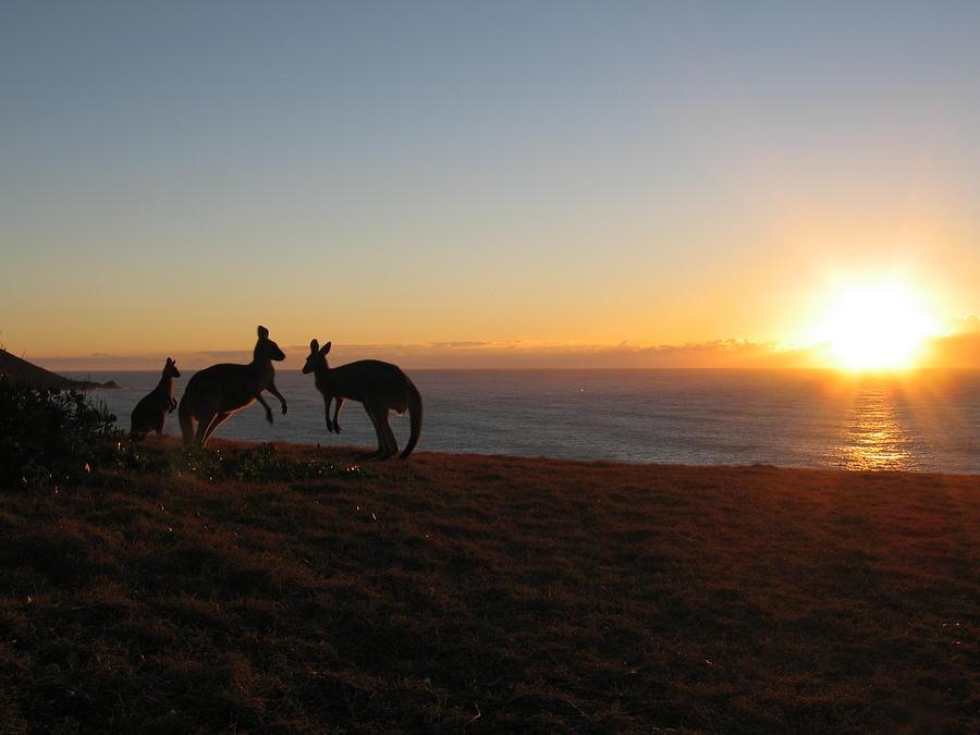 Kangaroo Family Sunset Photograph