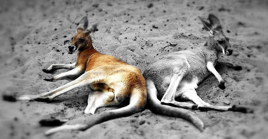 Kangaroo Heart Photograph