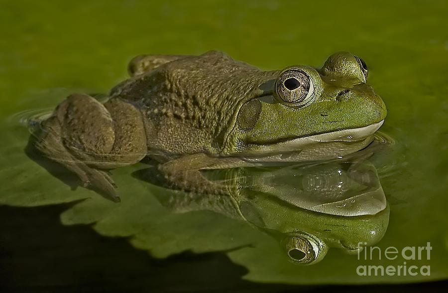 Kermit Photograph