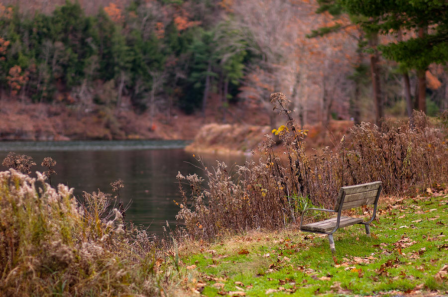 Kettle Creek Lake Bench Photograph By Scott Hafer