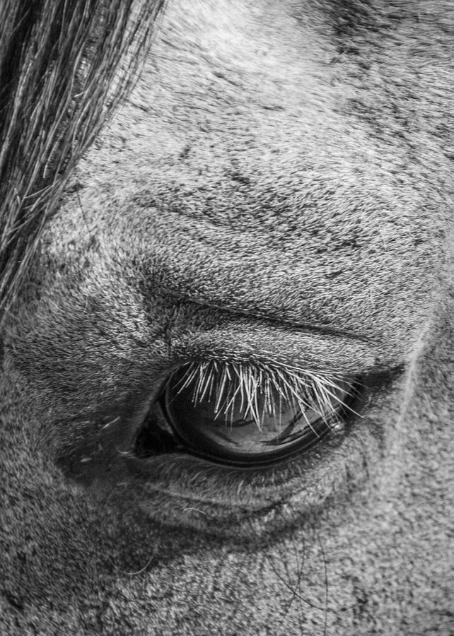 Animal Photograph - Kind Eye by Dianne Arrigoni