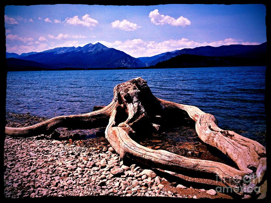 King Of The Driftwood Photograph