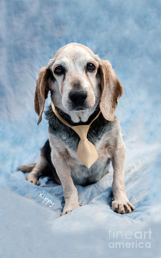 Kippy Beagle Senior And Best Dog Ever Photograph