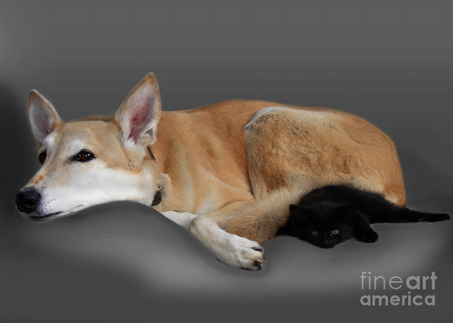 Kitten And Canine Photograph