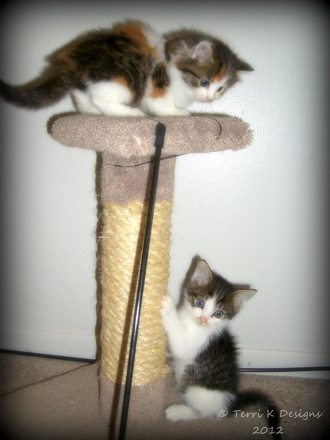 Kitten Fun Photograph