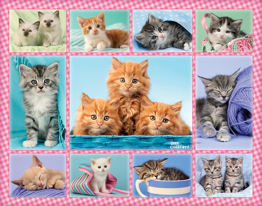 Kittens Gingham Multi-pic Digital Art  - Kittens Gingham Multi-pic Fine Art Print