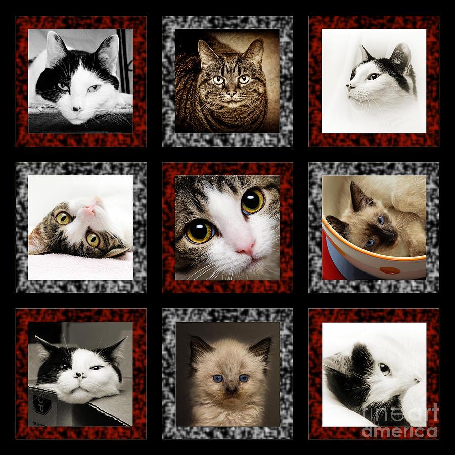 Kitty Cat Tic Tac Toe Photograph