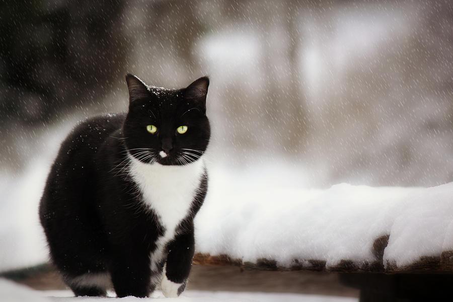 Kitty Snow Play Photograph