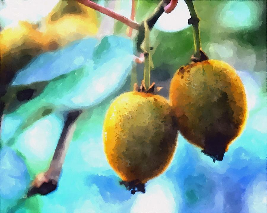 Kiwi Fruit Ripening On A Tree Painting