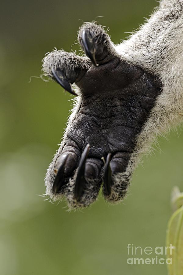 Koala Hand is a photograph by Gerry Pearce which was uploaded on ...
