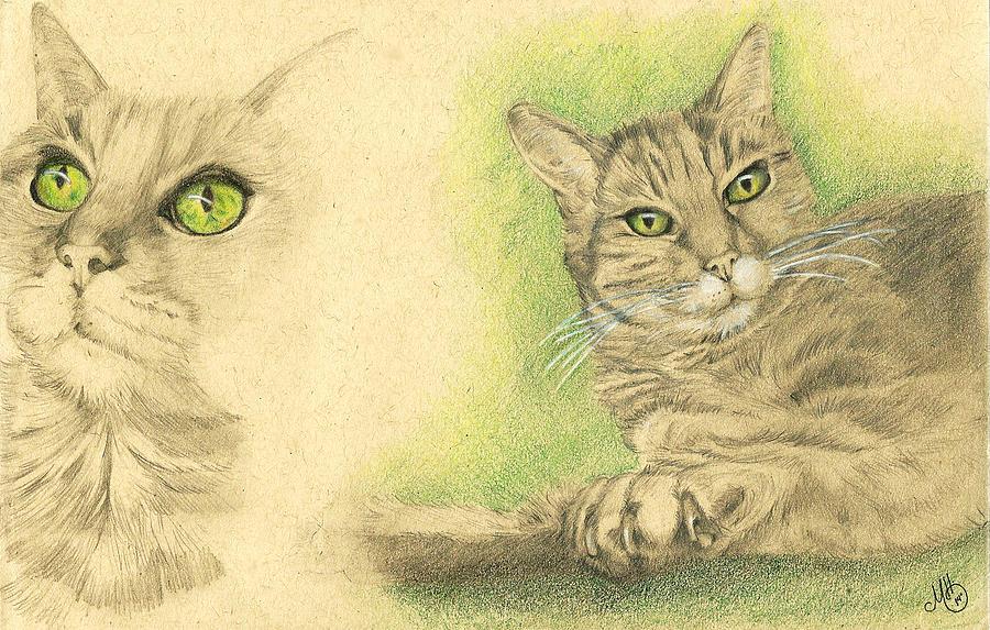 Cat Drawing - Kobi Study by Marcianna Howard