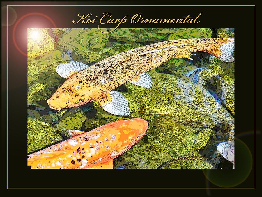 Koi carp goldfish ornamental framing print photograph by a for Decorative carp