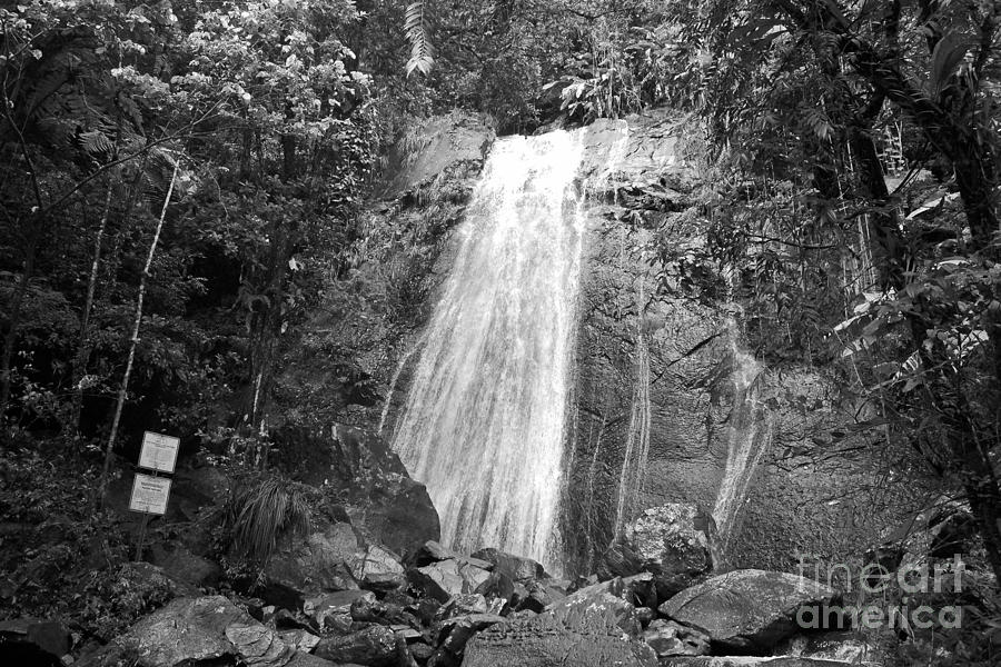 La Coca Falls El Yunque National Rainforest Puerto Rico Print Black And White Photograph  - La Coca Falls El Yunque National Rainforest Puerto Rico Print Black And White Fine Art Print