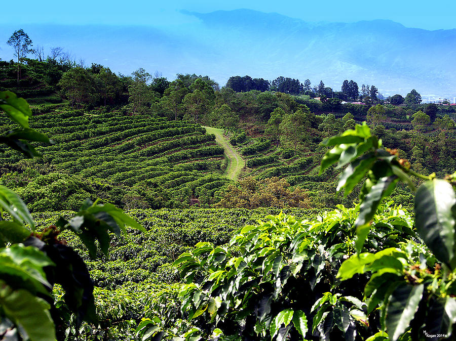 Coffee Tours In Central Valley Costa Rica