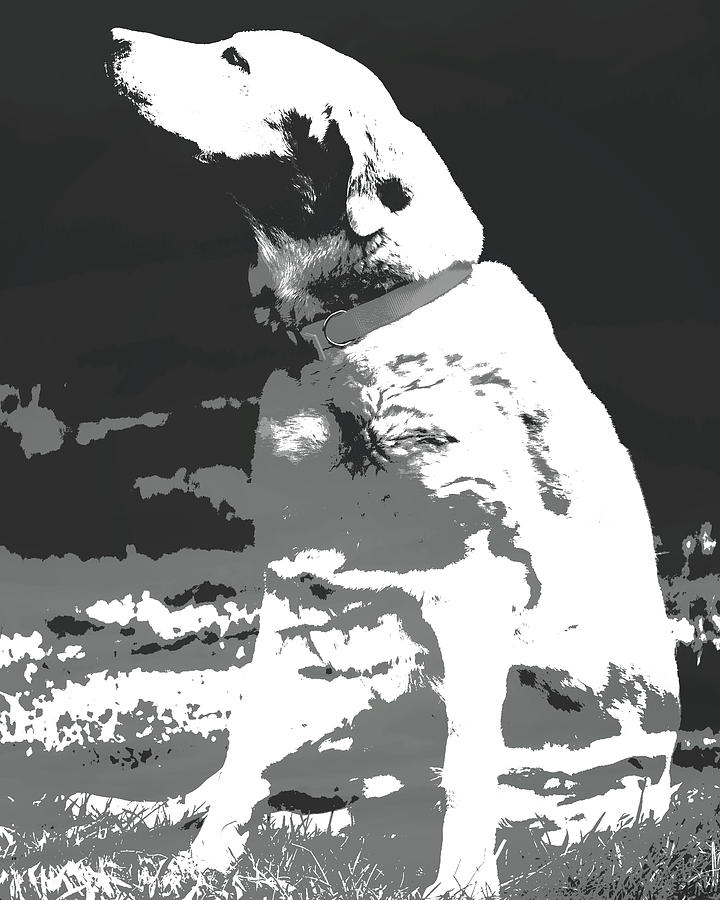 Labrador Smell The Air Photograph - Labrador Smell The Air by Terry DeLuco