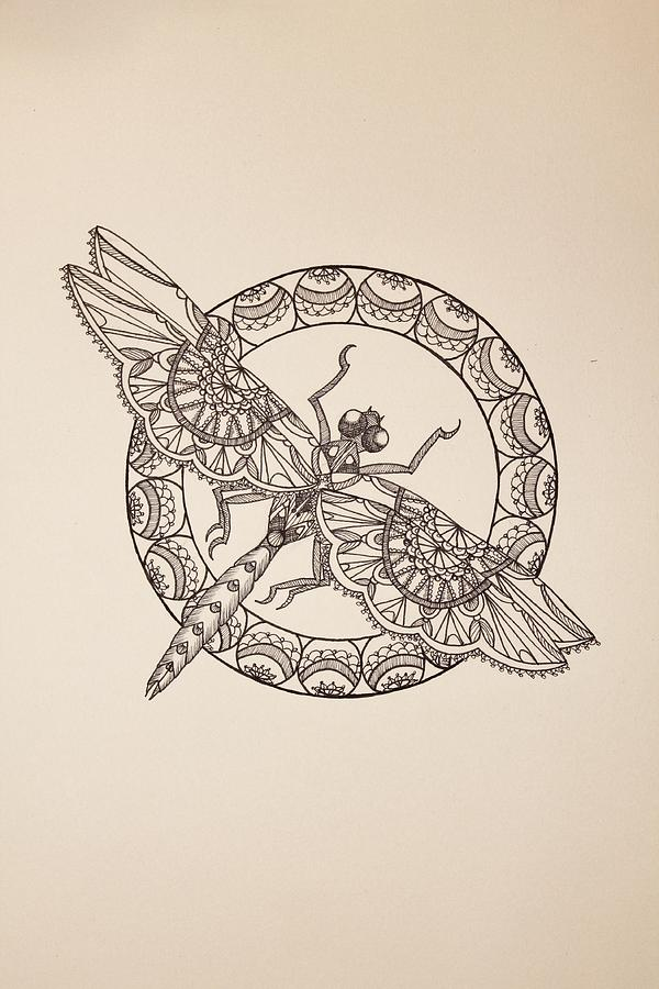 Lace Dragonfly Ii Drawing By Jodi Harvey Brown