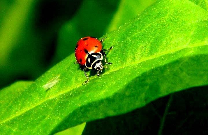 Ladybug Photograph - Ladybug by Brandon Garcia