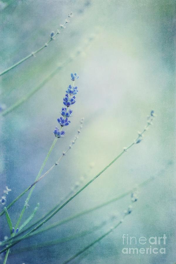 Lavender Photograph - Laggard by Priska Wettstein