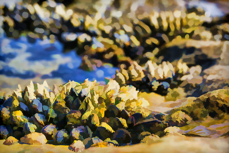 Laguna Beach Tide Pool Pattern 4 Photograph