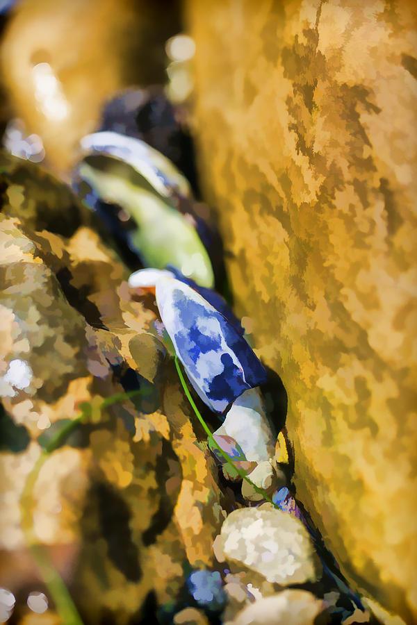 Shell Photograph - Laguna Beach Tide Pool Pattern 6 by Scott Campbell