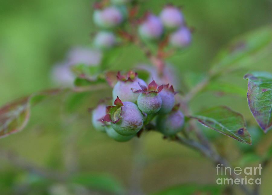 Flower Photography Photograph - Lake Side  by Neal  Eslinger