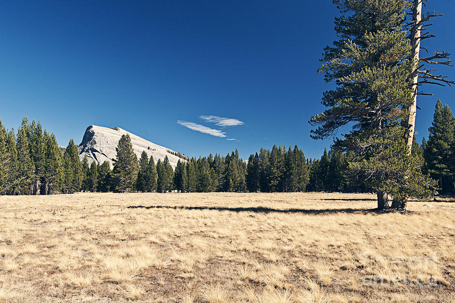 Lambert Dome In Yosemite National Park Photograph