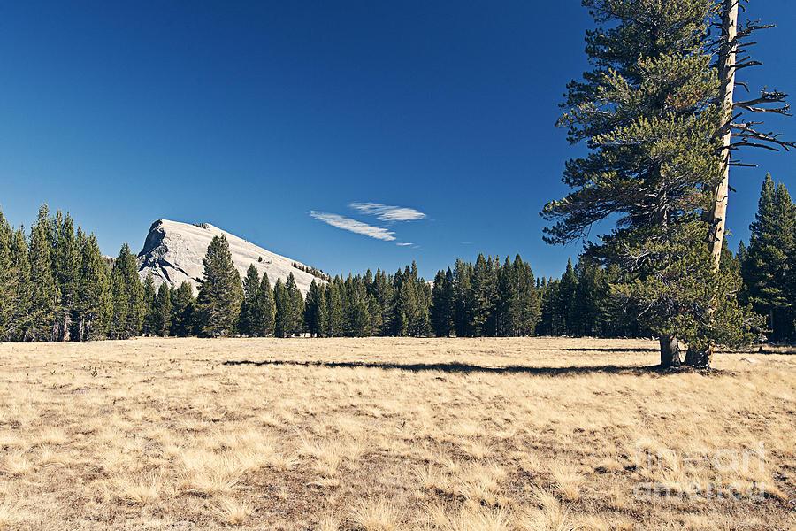 Lambert Dome In Yosemite National Park Photograph
