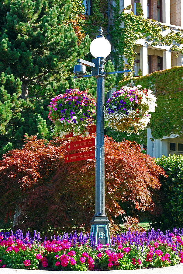 Baby Gift Basket Victoria Bc : Lamp post and hanging baskets victoria b c photograph by
