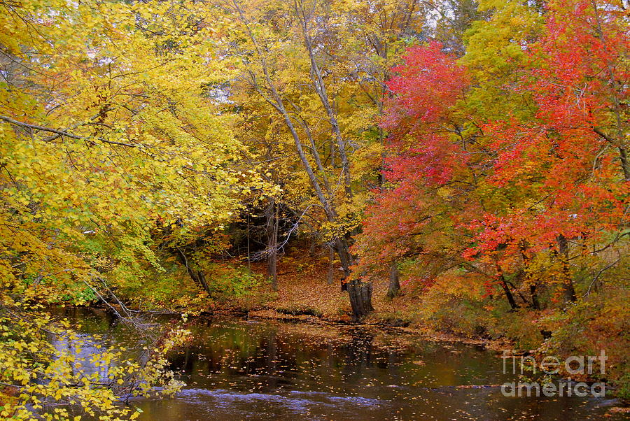Colored Leaves Photograph - Lamprey In Fall by Eunice Miller
