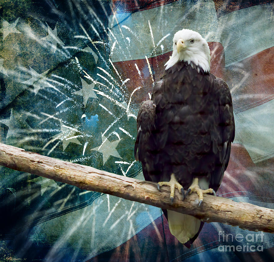 American Bald Eagle Photograph - Land Of The Free by Terry Weaver