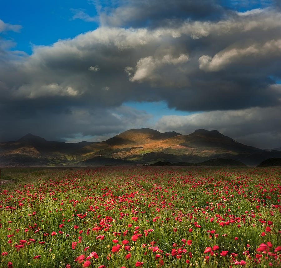 Landscape Of Poppy Fields In Front Of Mountain Range With Dramat Photograph