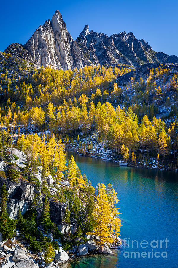 Alpine Lakes Wilderness Photograph - Larches At Perfection Lake by Inge Johnsson