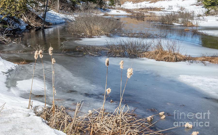 Winter Photograph - Last Days Of Winter by Jola Martysz