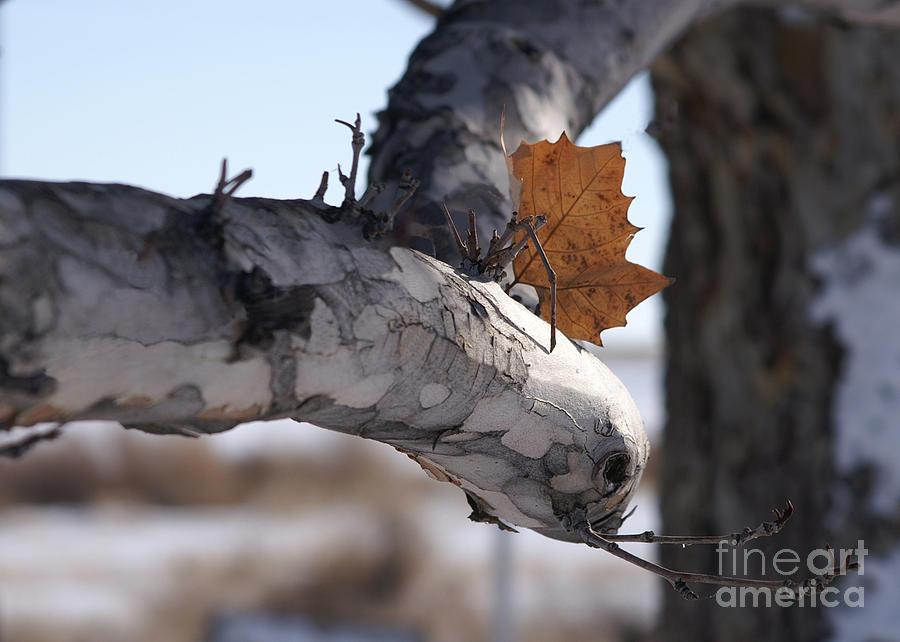 Last Leaf Photograph