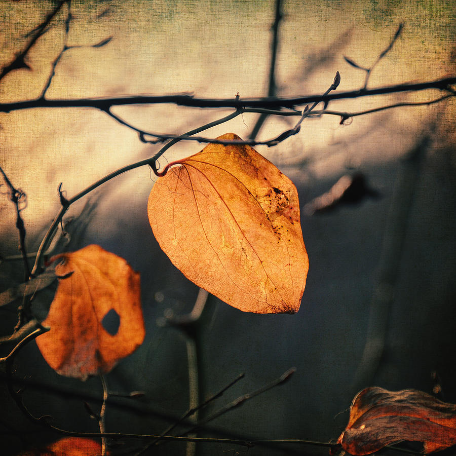 Last Leaves Photograph  - Last Leaves Fine Art Print