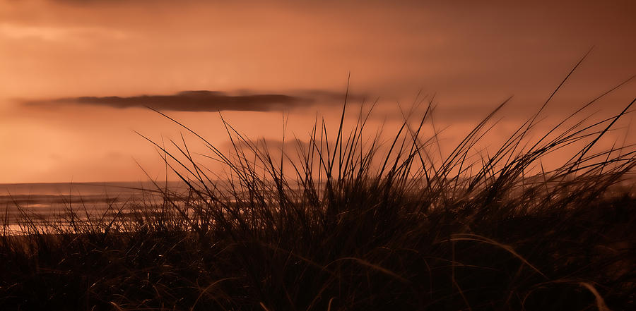 Last Light Through The Grasses Photograph