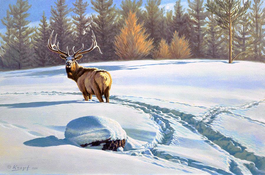 Wildlife Painting - Last Look  -elk by Paul Krapf