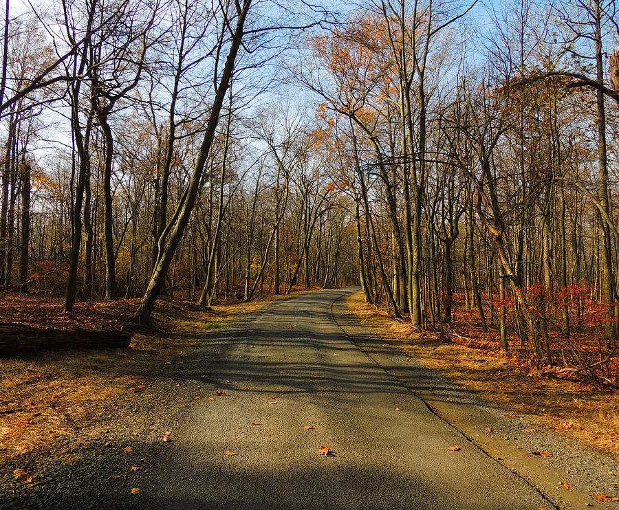 Late Fall At Cheesequake State Park Photograph