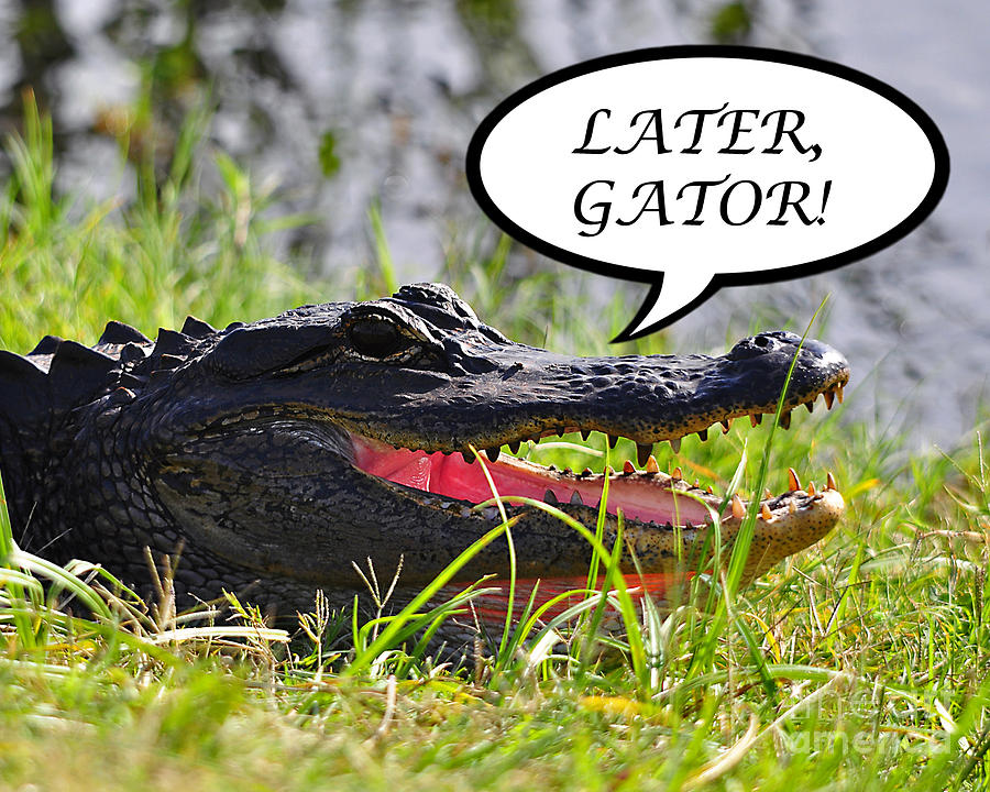Later Gator Greeting Card Photograph  - Later Gator Greeting Card Fine Art Print
