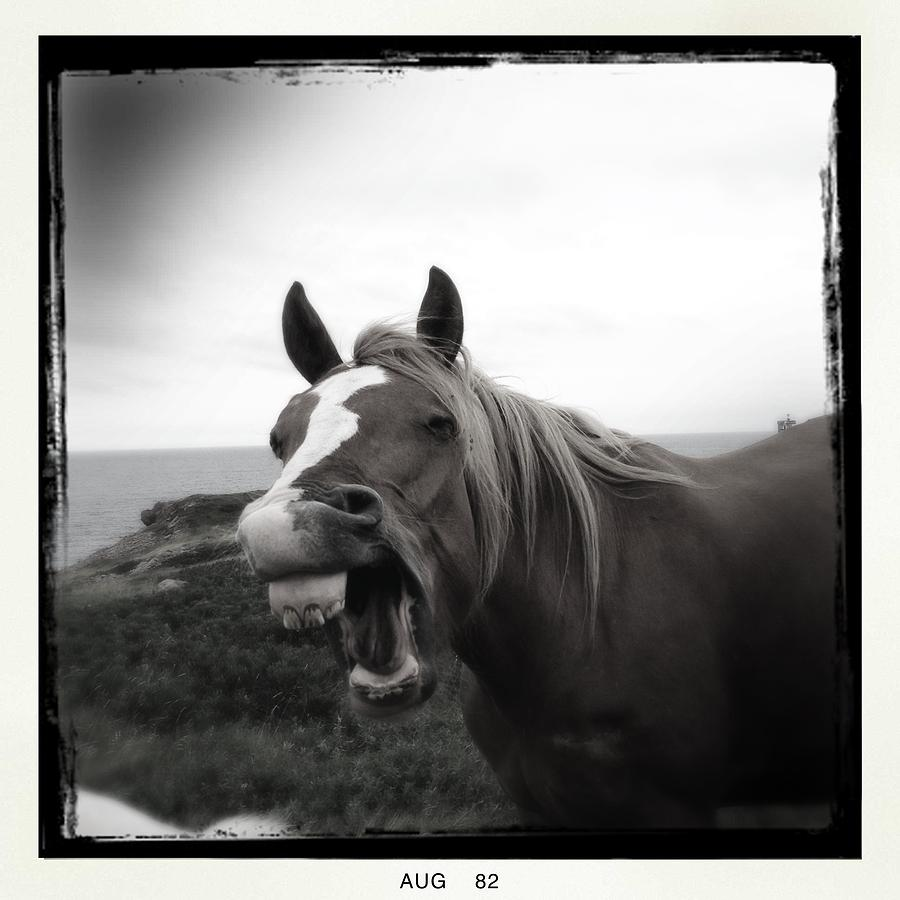 Laughing Horse Photograph