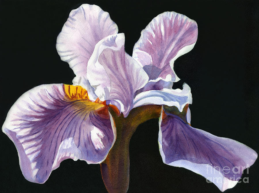 Lavender Iris On Black Painting  - Lavender Iris On Black Fine Art Print