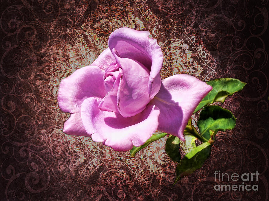 Lavender Rose Photograph  - Lavender Rose Fine Art Print