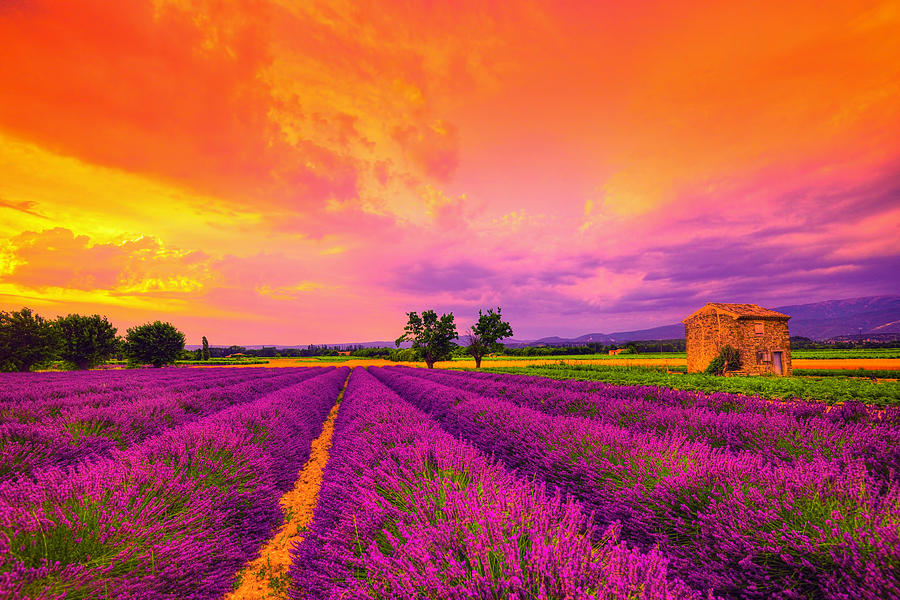 Lavender Photograph - Lavender Sunset by Midori Chan