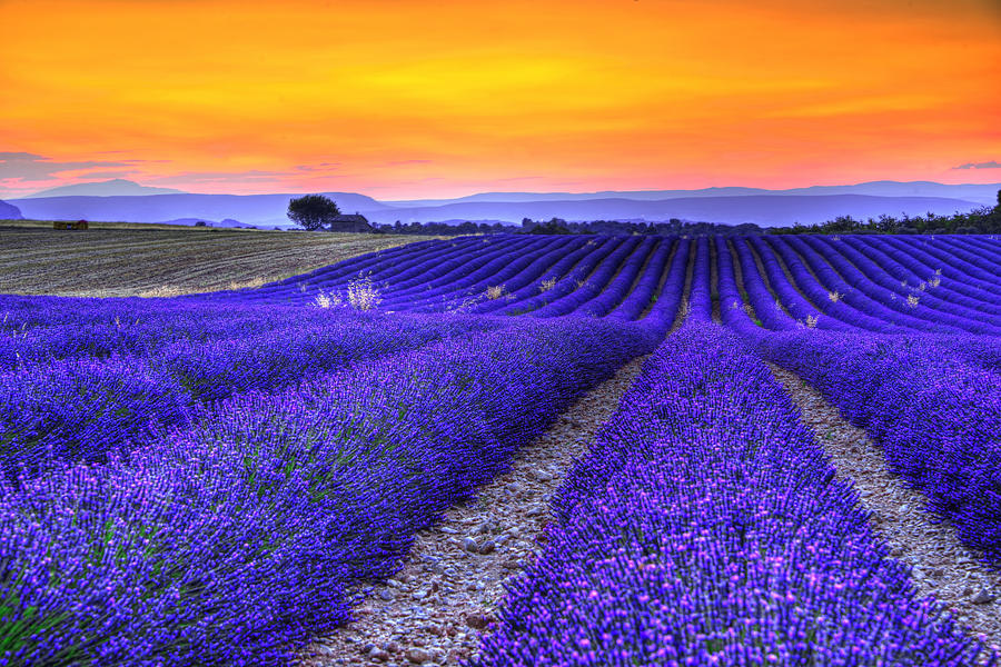 Lavenders Sunset Photograph