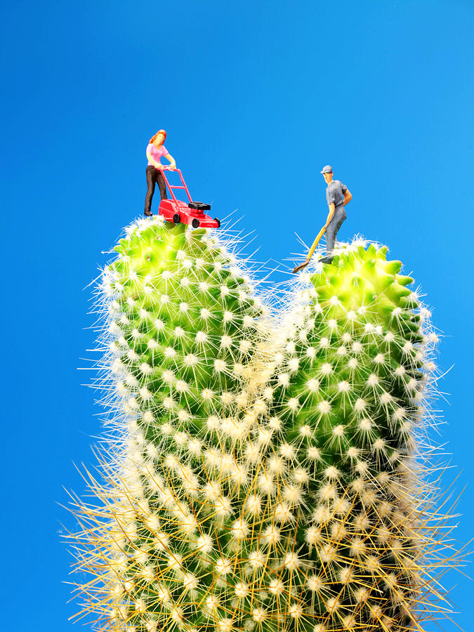 Lawn Photograph - Lawn Mowing On Cactus by Paul Ge